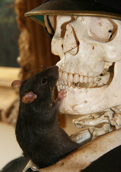 Rat at the Crude Oils exhibition