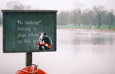 Bathing Rat by Banksy