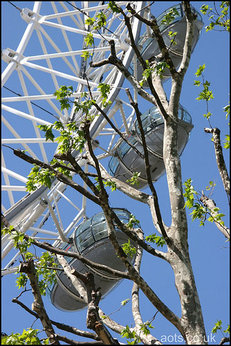 Photo of the London Eye in the Spring