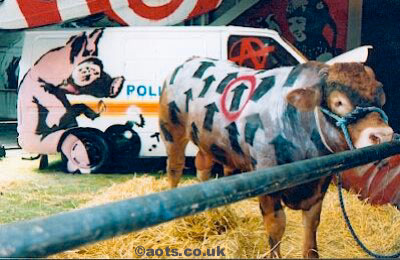 Banksy painted cow