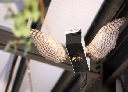 DFace Apopcalypse CCTV bird