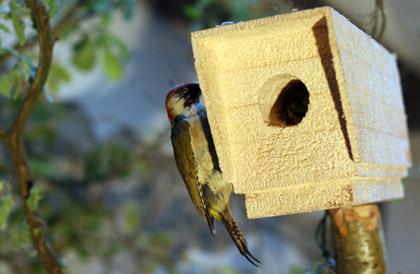 DFace Apopcalypse CCTV bird box