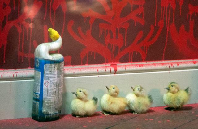 Banksy Ducklings
